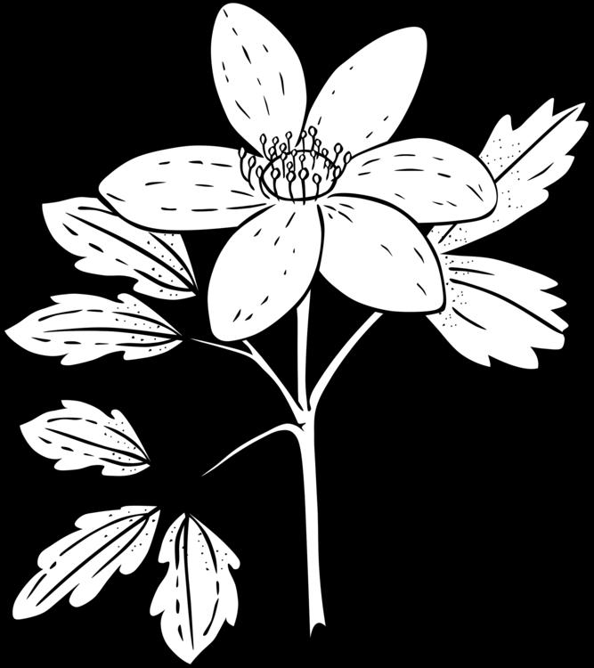 Ku Anemone Piperi Outline Clip Art.