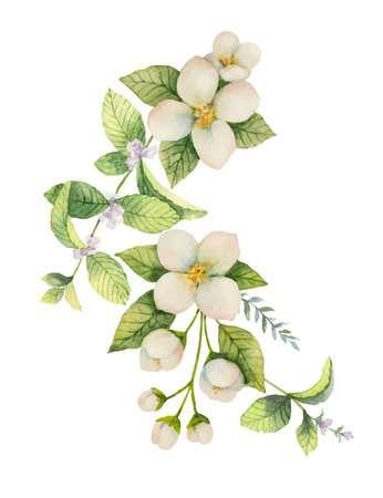 2,517 Jasmine Flower Cliparts, Stock Vector And Royalty Free Jasmine.
