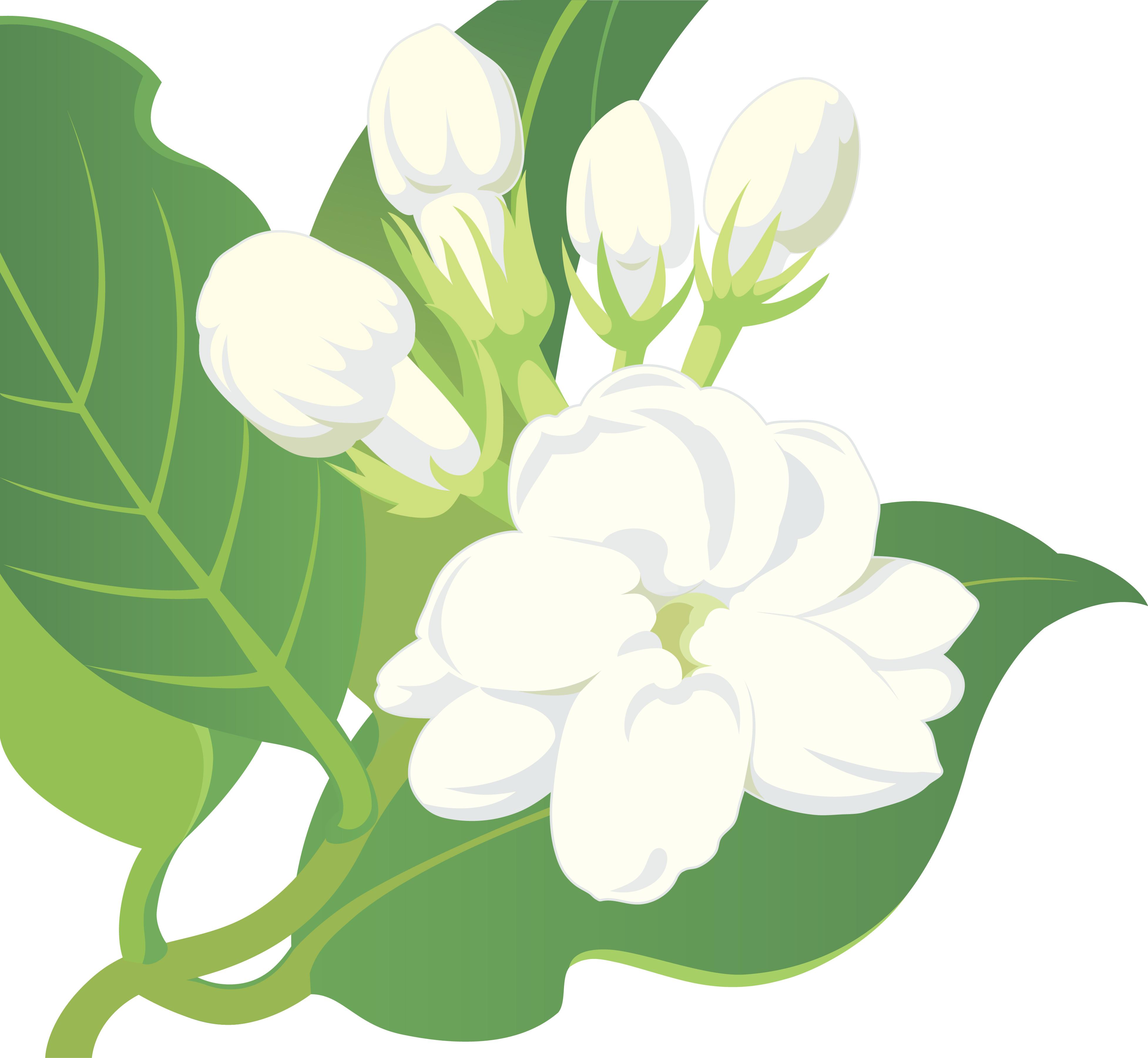 jasmine flower clip art #7.