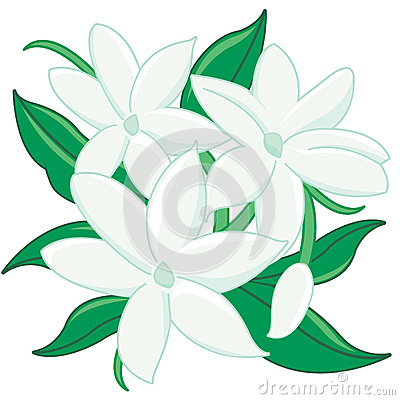 Jasmine flower clipart.