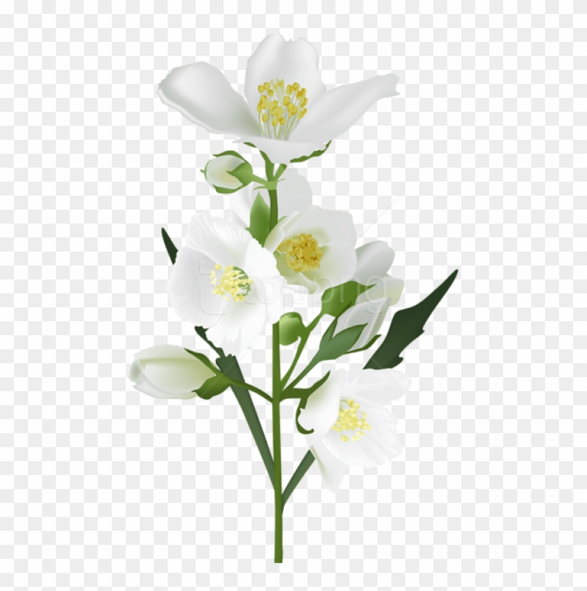 Free Png Download White Flower Png Images Background.