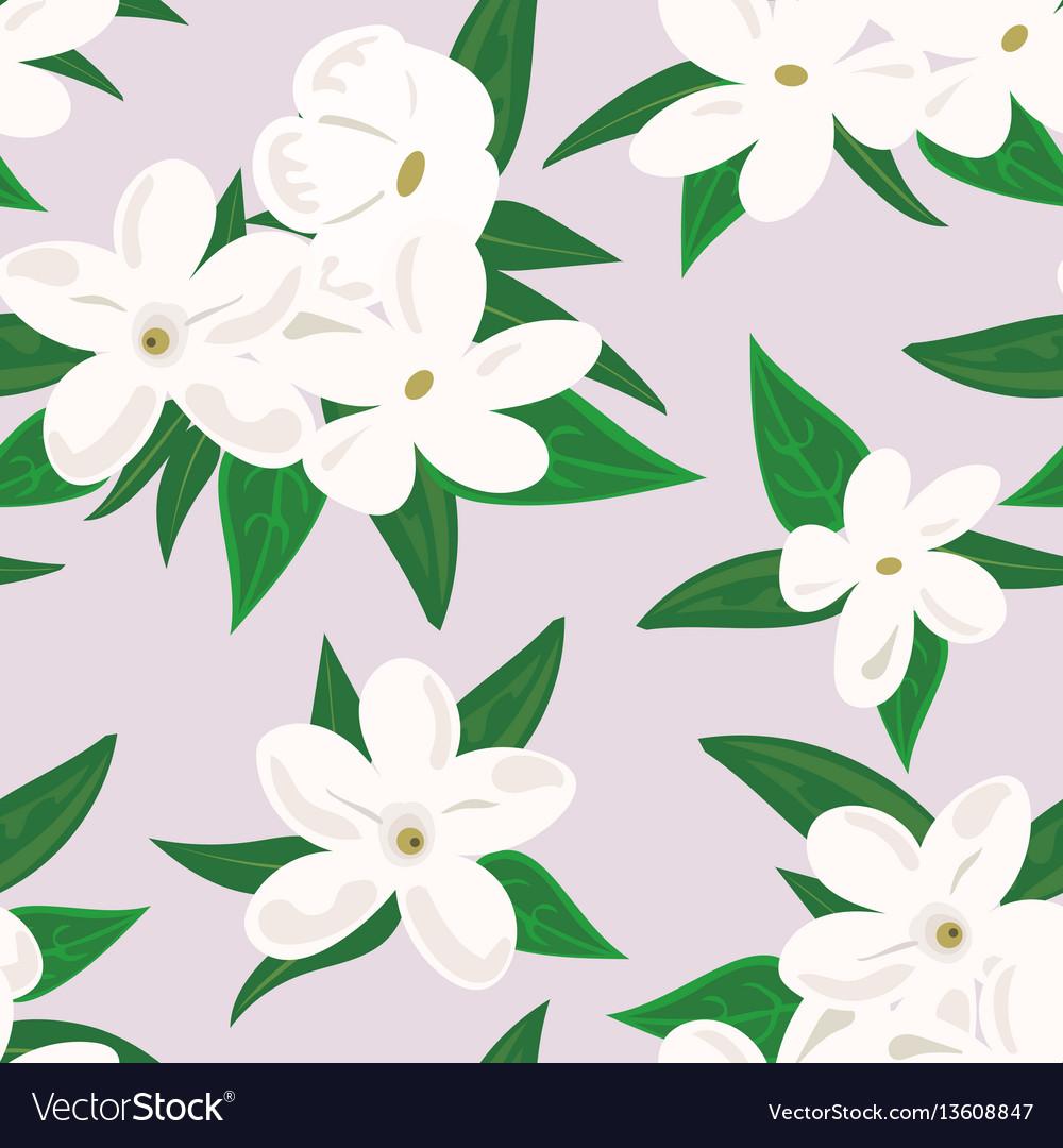 White jasmine flower branch of jasmine flowers.