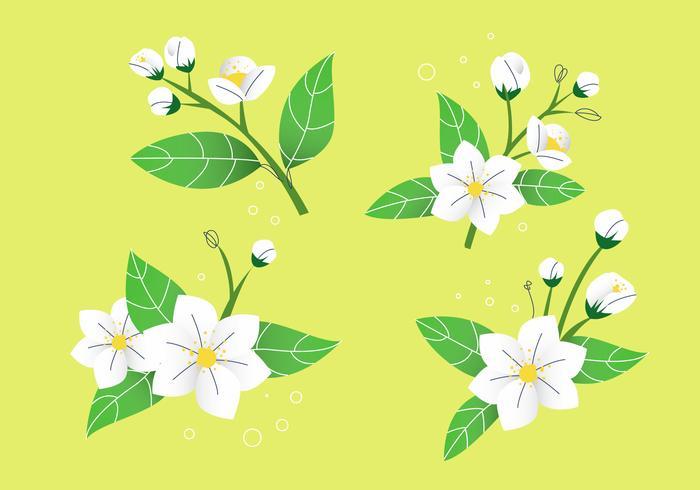 White Jasmine Flower Petals Vector Illustration Stock.