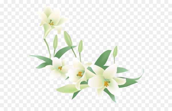 Flower Jasmine Euclidean vector Clip art.