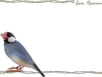 Java Sparrow, Java Finch clipart graphics (Free clip art.