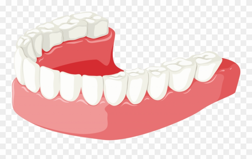 Free Png Download Lower Jaw Clipart Png Photo Png Images Transparent.