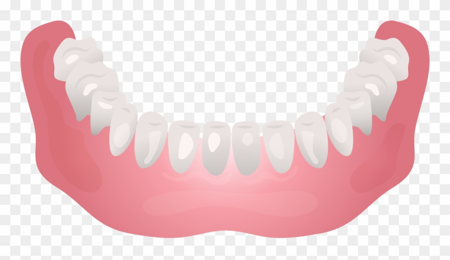 Bottom Human Jaw Clip Art.