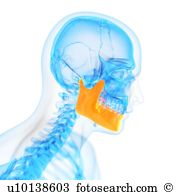 Jaw Illustrations and Clip Art. 3,551 jaw royalty free.