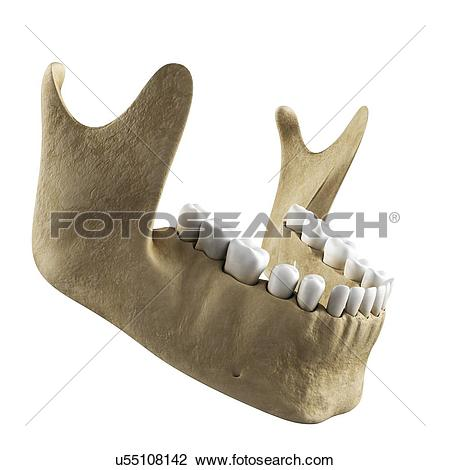 Clip Art of Jawbone, artwork u55108142.