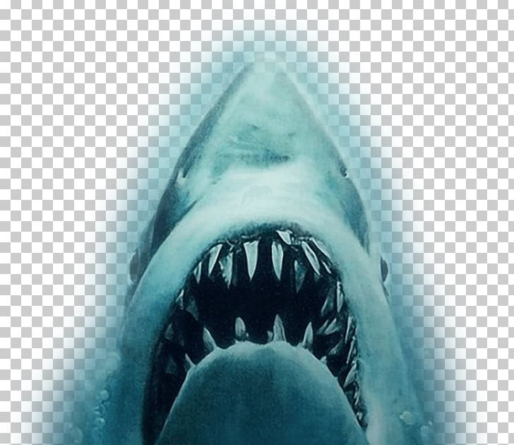 YouTube Shark Jaws Trailer Film PNG, Clipart, Blockbuster.