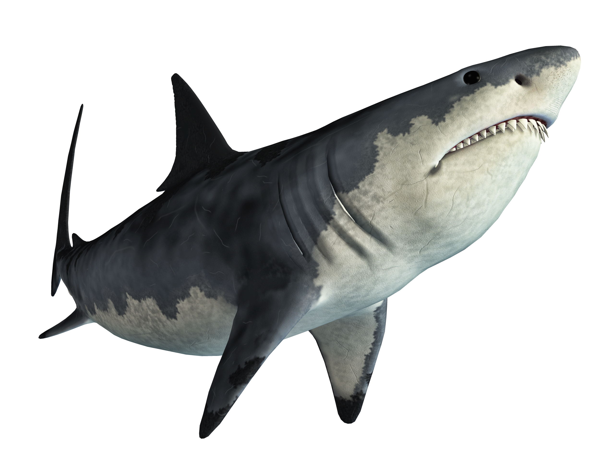 Shark Jaws Tadzio.