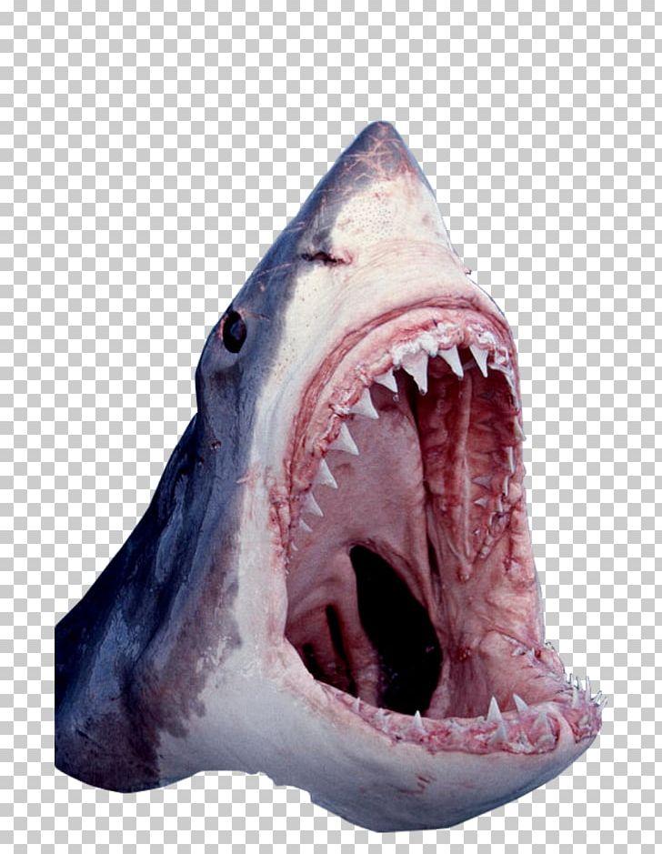 Great White Shark Tiger Shark Cartilaginous Fishes Shark Jaws PNG.