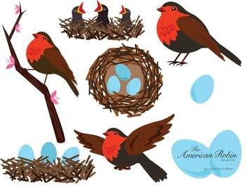 American Robin Bird Clip Art Set.
