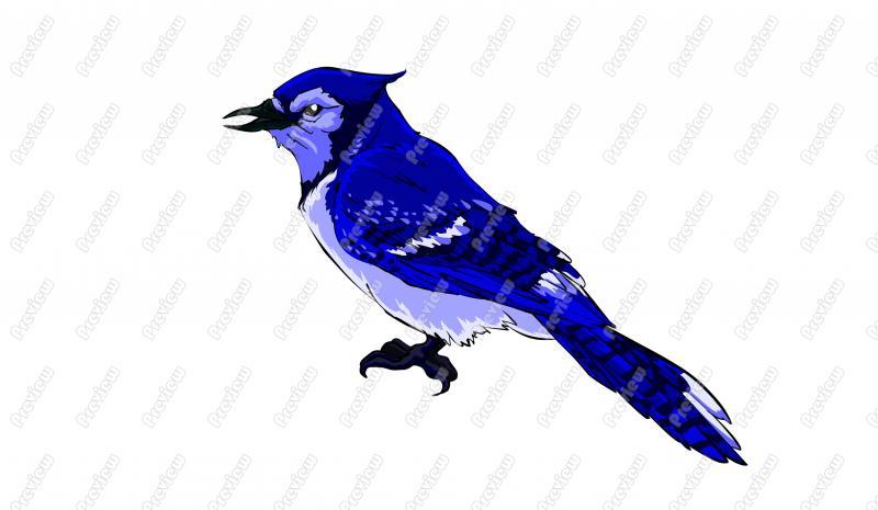 Blue Jay Character Clip Art.