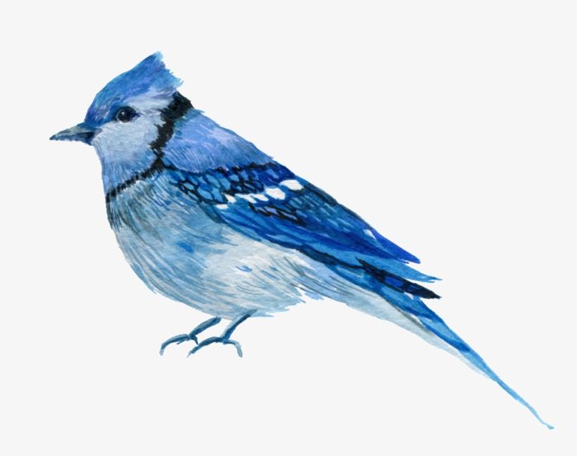 Bird,Blue jay,Vertebrate,Mountain Bluebird,Jay,Beak,Bluebird.