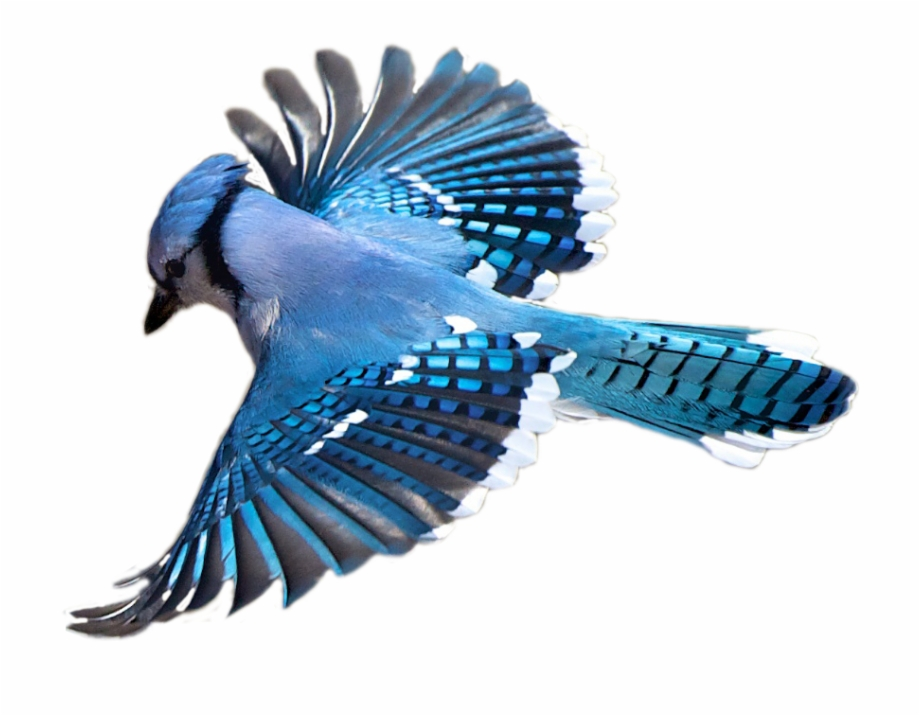 Birdwatching Flight Flying Bird Transprent Png Free.