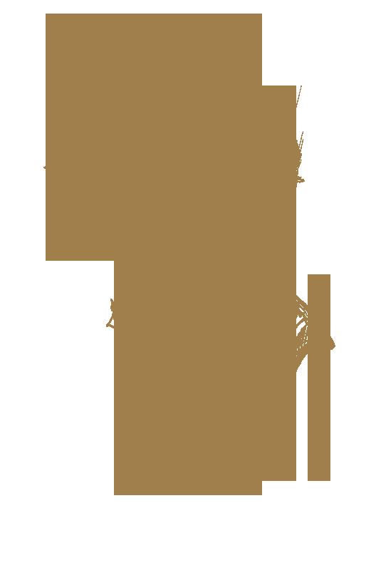 Jazz, HD type.