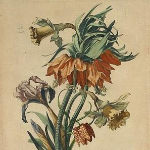 Jean Baptiste Monnoyer — Dumbarton Oaks.