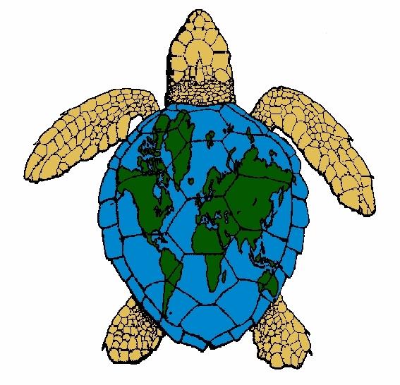 Sea Turtle Center « 5/6 « Jekyll Island Jekyll Island.