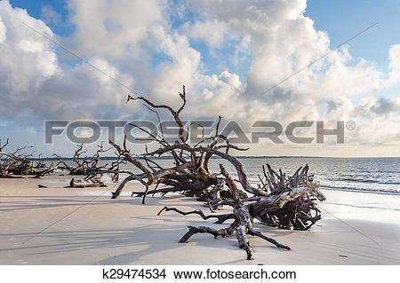 Stock Photo of Driftwood Beach, Jekyll Island Georgia k29474534.