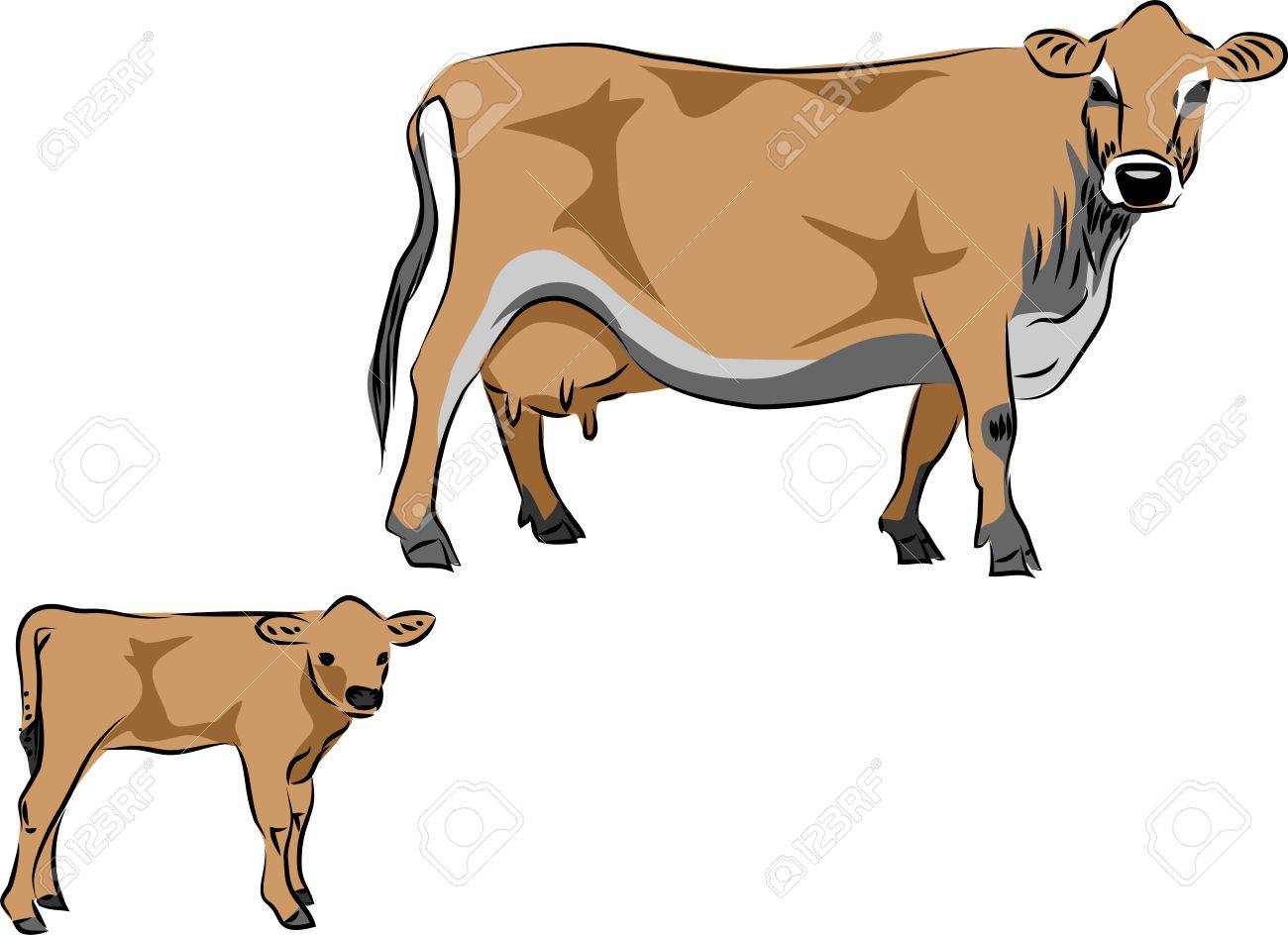 Jersey cow with calf vector illustration.