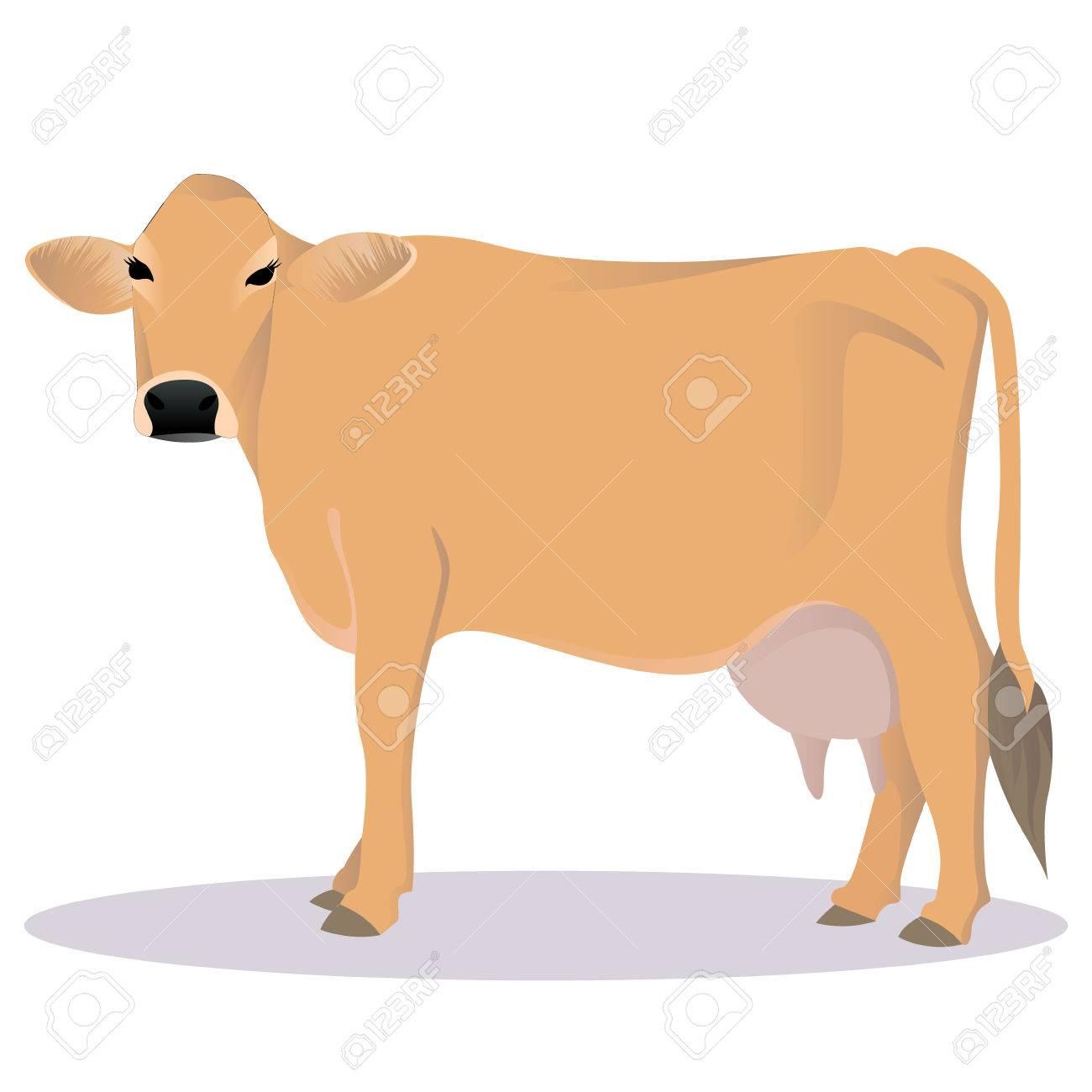 Jersey cattle vector illustration.