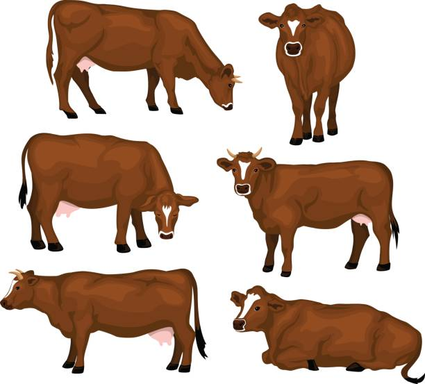 Jersey Cow Illustrations, Royalty.