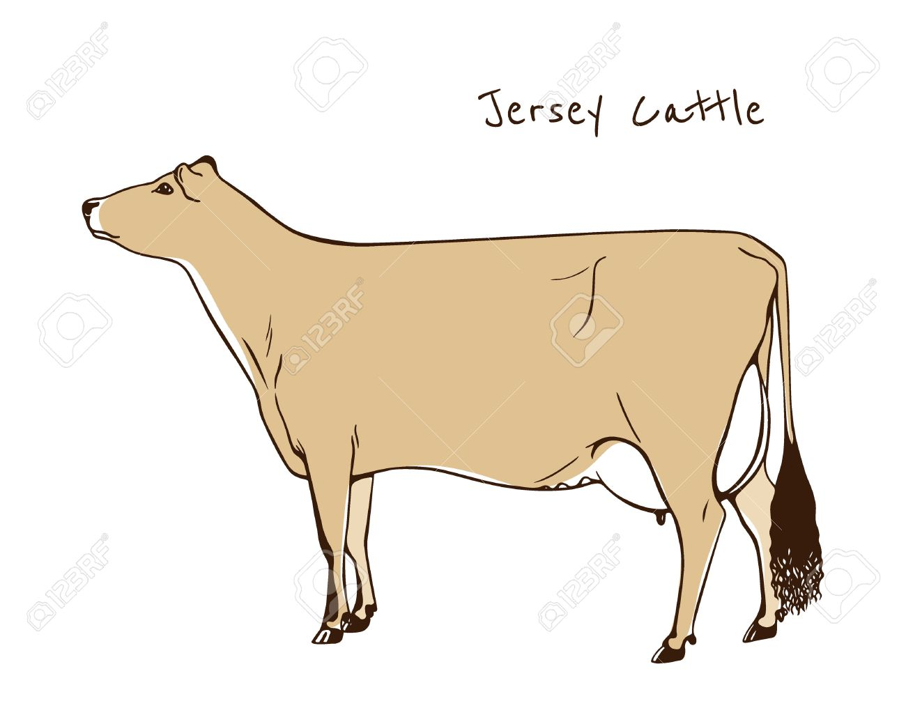 jersey cow pictures clip art #5