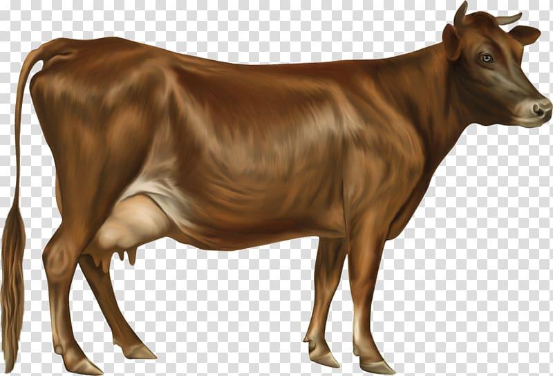 Jersey cattle Holstein Friesian cattle Guernsey cattle.