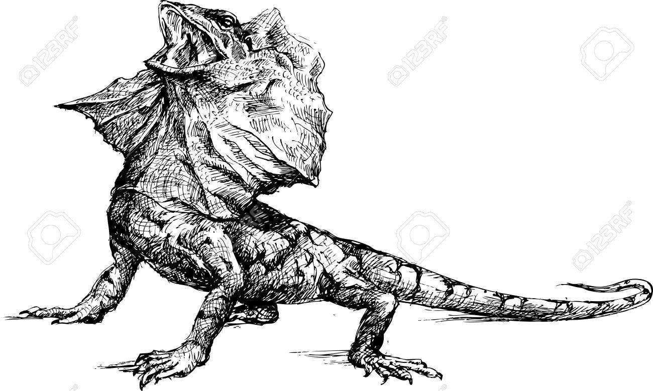 Hand Drawn Basilisk Lizard Royalty Free Cliparts, Vectors, And.