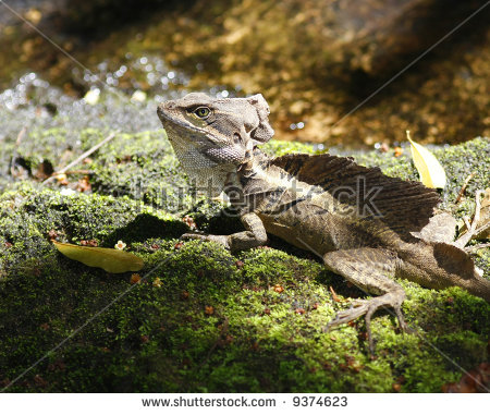 Vector Images, Illustrations and Cliparts: Brown Basilisk, Jesus.