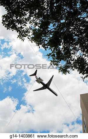 Stock Photography of Florida, Miami, jet, airliner, fly, sky, tree.