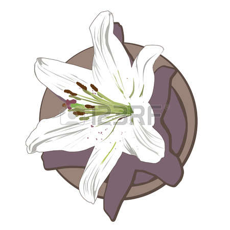 Jewelry Lilies Images, Stock Pictures, Royalty Free Jewelry Lilies.