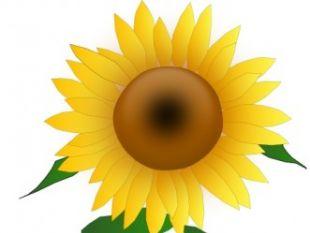 Sunflower Jh clip art.