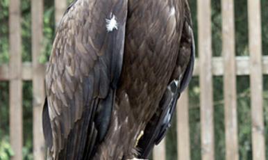 Predatory bird park ǀ Stubaital Tirol.