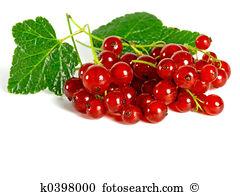 Pip fruit Stock Photo Images. 5,069 pip fruit royalty free.