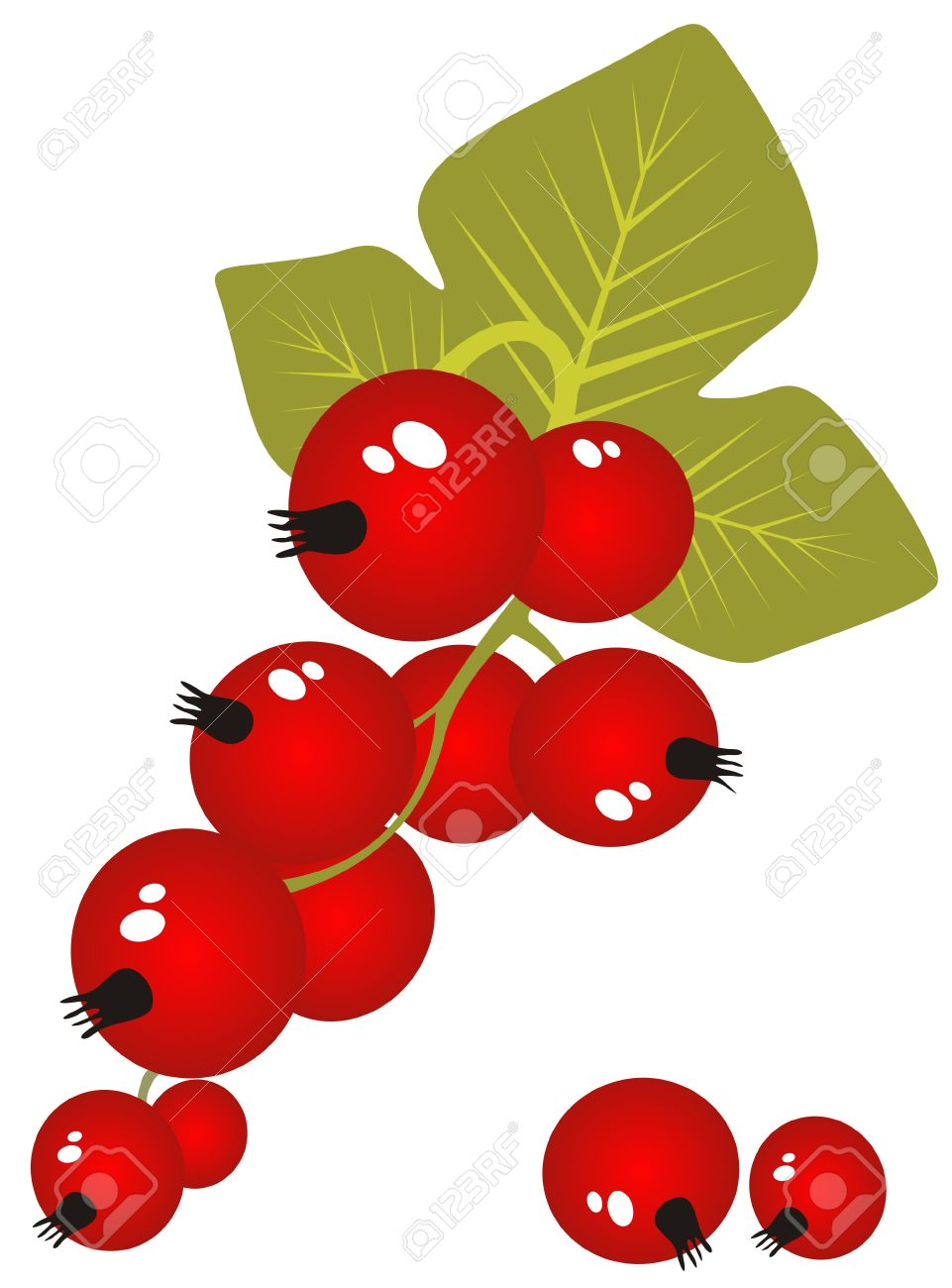 Stylized Red Currant Isolated On A White Background. Royalty Free.