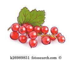 Rote johannisbeere Clip Art Lizenzfrei. 146 rote johannisbeere.
