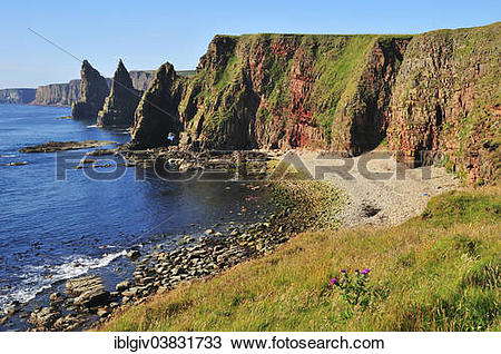 """Stock Photo of """"Duncansby Stacks pinnacles in the morning light."""