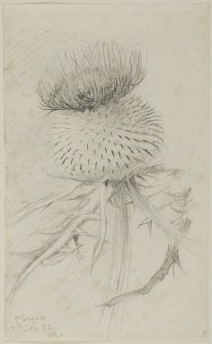 Ashmolean − The Elements of Drawing, John Ruskin's teaching.