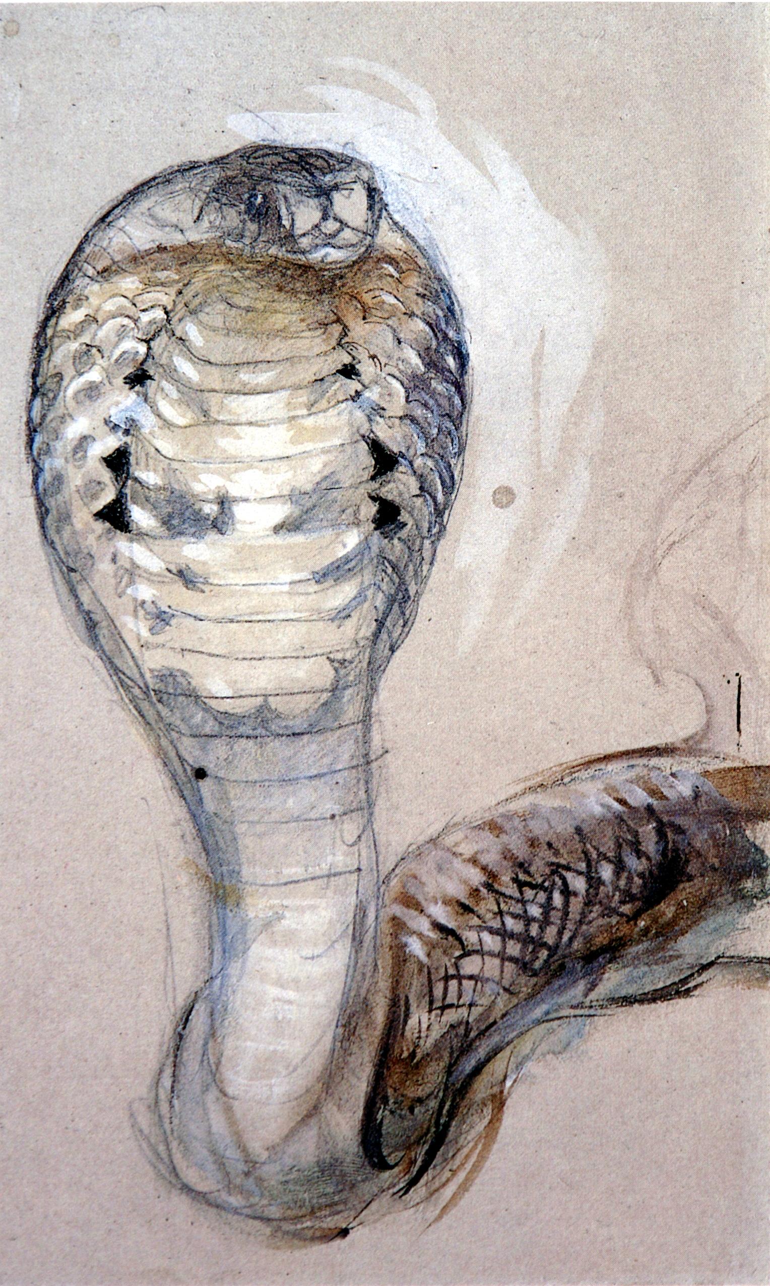 File:Full Face of Cobra Ruskin.jpg.