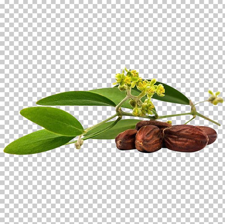Jojoba Oil Seed Oil PNG, Clipart, Carrier Oil, Essential Oil, Flower.