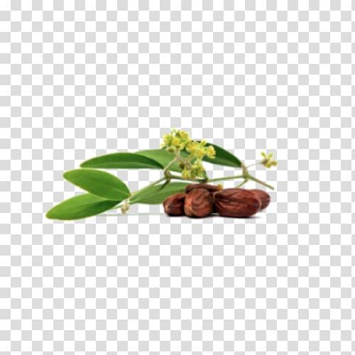 Jojoba oil Seed oil, oil transparent background PNG clipart.