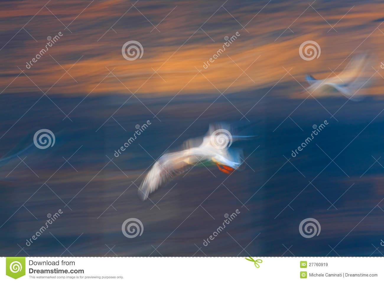 Jonathan Livingston Seagull Royalty Free Stock Images.