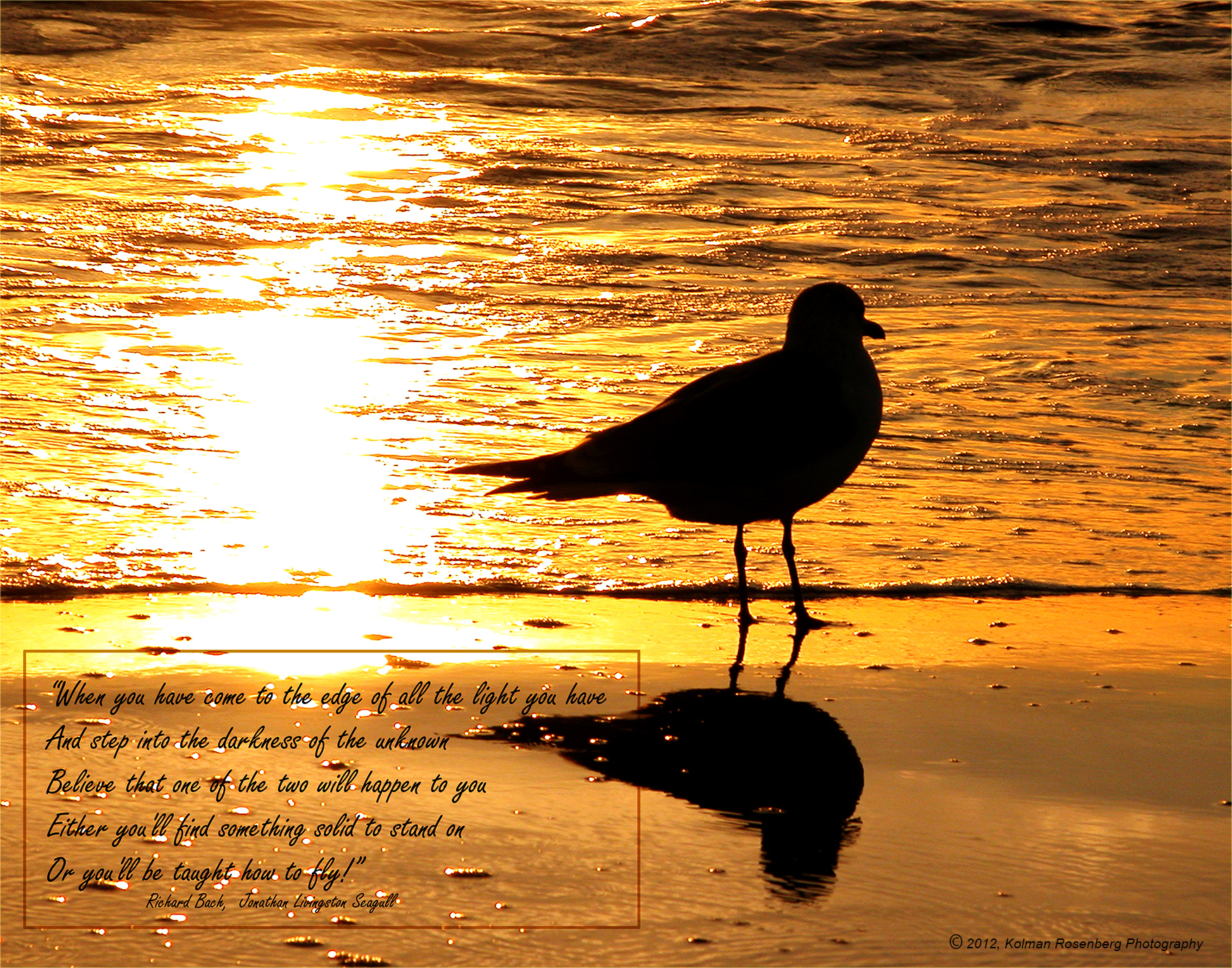 Jonathan Livingston Seagull Quotes Related Keywords & Suggestions.