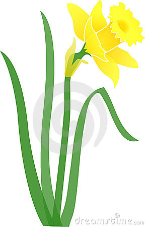 Jonquil Stock Photos, Images, & Pictures.
