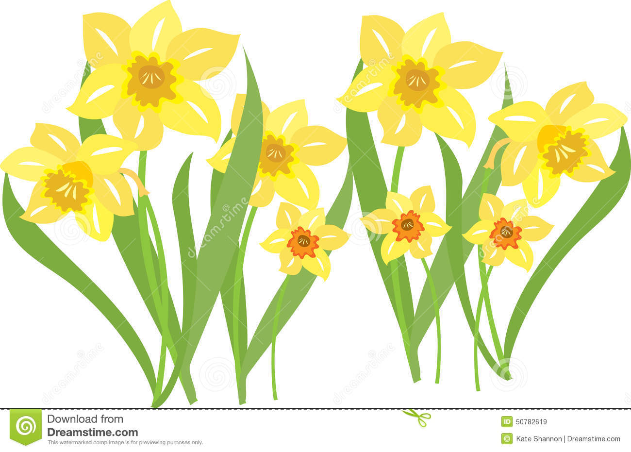 Daffodils Stock Vector.