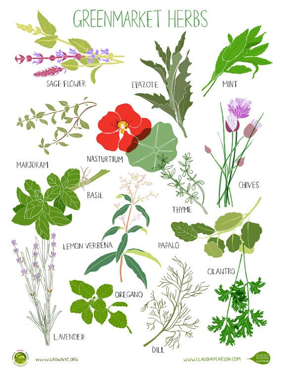 1000+ images about foliage illustrations on Pinterest.