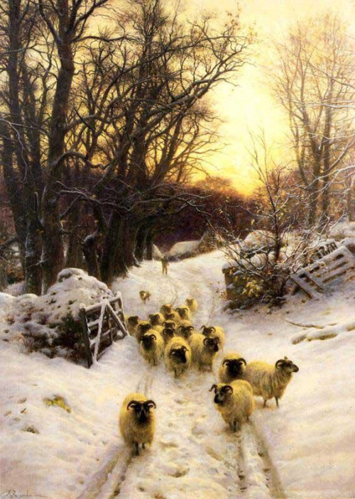 sheeps in snow.