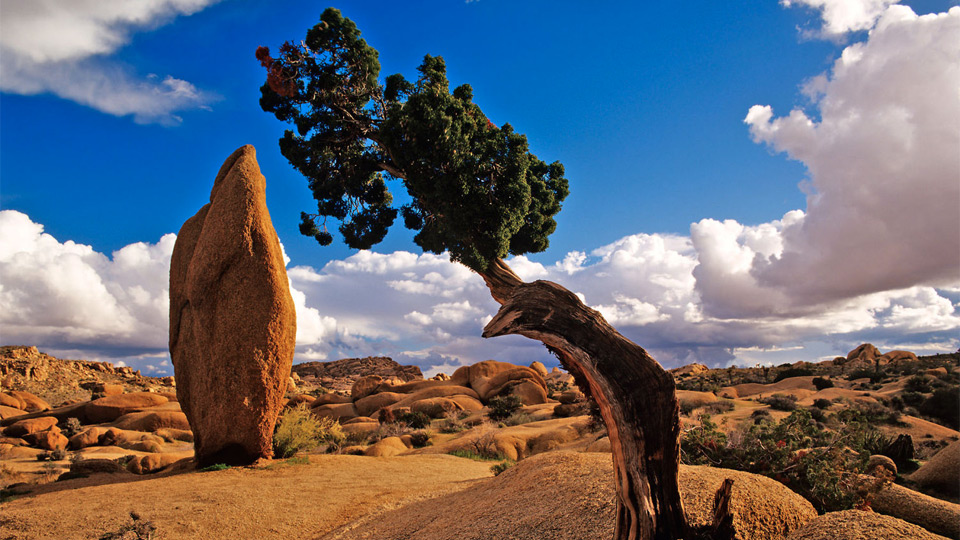 1400x720px #855848 Joshua Tree National Park (232.95 KB).